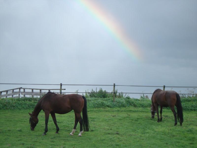 Jouw top 3 van blij met je paard-momenten?